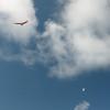 Wings over Makapuu-17