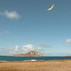 Wings over Makapuu-178