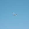 Afternoon flight-142
