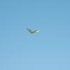 Afternoon flight-130