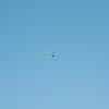 Afternoon flight-136