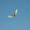 Afternoon flight-149