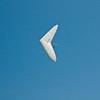 Goto's Girlie Glider-12