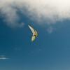 Goto's Girlie Glider-15