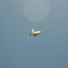 Goto's Girlie Glider-97
