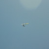 Goto's Girlie Glider-92