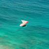 Flying Low over Makapuu-132
