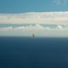 Wednesday flying-4