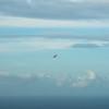 Afternoon Flight-1