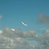 Paper Glider-12
