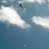 Paper Glider-96
