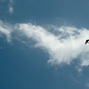 Paper Glider-93