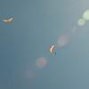 Blue flight-85