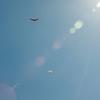 Blue flight-184