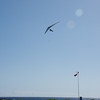 Hang Gliding in 3D-138