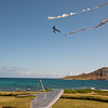 Hang Gliding in 3D-141