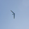 Hang Gliding in 3D-136
