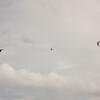 Cloudy Flight-10
