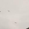 Cloudy Flight-3