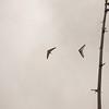 Cloudy Flight-4