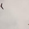 Cloudy Flight-9