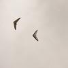 Cloudy Flight-5