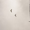 Cloudy Flight-6