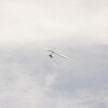 Cloudy Flight-71