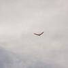 Cloudy Flight-62