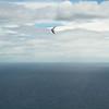 Full Flight-102