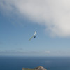 Good Flying-15