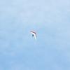Chasing Tail-163