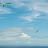 Chasing Tail-9