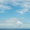 Chasing Tail-16