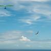 Chasing Tail-8