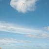 Afternoon Flight-177