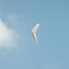Afternoon Flight-173