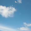 Afternoon Flight-175
