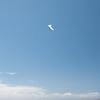 Memorial Day Flight-98