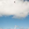 Phat Flying-252