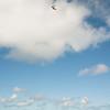 Phat Flying-251