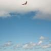 Phat Flying-256