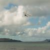 Phat Flying-265
