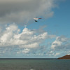 Phat Flying-263