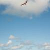 Phat Flying-257