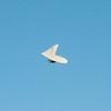 Midweek flying-11