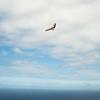 Saturday Flight-12