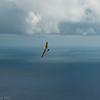 August morning flight-7