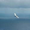 August morning flight-9
