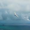 August morning flight-19